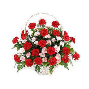 鲜花/有您陪伴: 33枝红色康乃馨,15枝多头粉色康乃馨  [