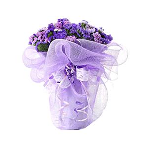 鲜花/永恒的记忆: 勿忘我20枝  [包 装]:紫色网纱圆形精美